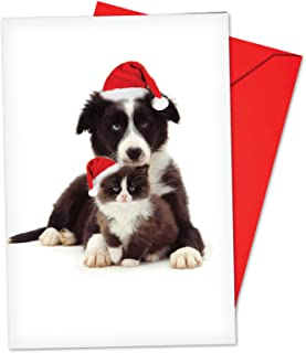 12 'Copy Cats Border Collie' Boxed Christmas Cards with Envelopes 4.63 x 6.75 inch, Funny Puppy and Kitty Christmas Notes, Holiday Dog and Cat Cards, Adorable Christmas Stationery B6596GXSG