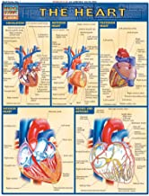 Heart (Quick Study Academic)