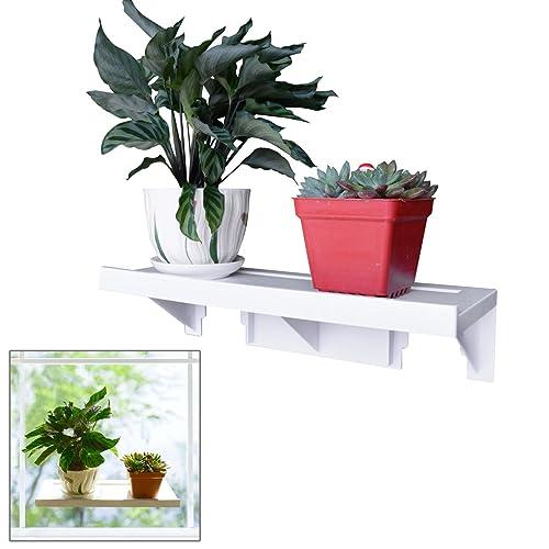 Kitchen Window Plants Amazon Com