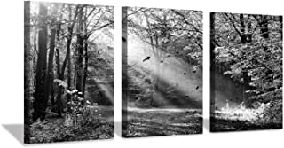 Hardy Gallery Forest Artwork Landscape Wall Art: Sunlight & Shadow Picture Print on Canvas for Wall Decor (12