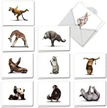 Zoo Yoga - 20 All Occasion Note Cards with Envelope (4 x 5.12 Inch) – Assorted Animals, Boxed Greeting Notecard Set - Wildlife Stationery Card Gifts (2 Each, 10 Designs) AM6547OCB-B2x10