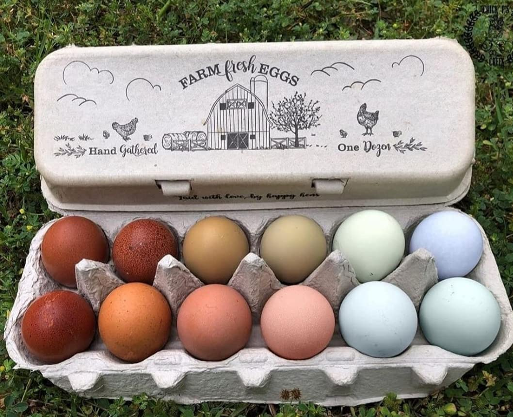 20 Egg Cartons Kansas City Mall – Adorable Vintage Don't miss the campaign Printed Ca Design Flattop