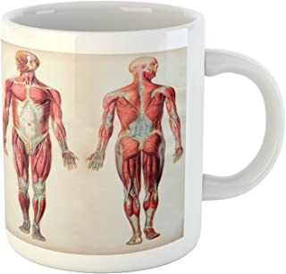 Ambesonne Human Anatomy Mug, Vintage Chart of Body Front Back Skeleton and Muscle System Bone Mass Graphic, Ceramic Coffee Mug Cup for Water Tea Drinks, 11 oz, Ruby Cream