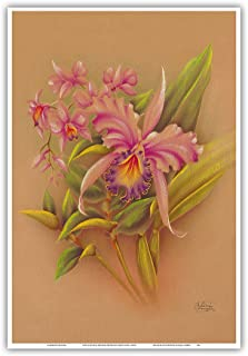 Pacifica Island Art Pink Cattleya Orchid Flower - Hale Pua Studio Hawaii - Vintage Hawaiian Airbrush Art by Frank Odac.1940s - Master Art Print - 13 x 19in