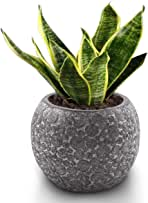 """Small Plant Pots, 5"""" Indoor Planters Flower Pots for Cactus Succulents Nursery Aloe Snake Resin Shatter-Resistant Planter with Leak Proof Handcraft Planter for Decorative(Dark Grey)"""