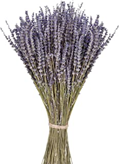 June Fox Dried Lavender Flowers 100% Natural Dried�Lavender�Bunches for Home Decoration, Home Fragrance, Handmade Soap Flower, 270-300 Stems