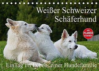 Weisser Schweizer Schaeferhund - Ein Tag im Leben einer Hundefamilie (Tischkalender 2022 DIN A5 quer): Auf 13 Kalenderblae...