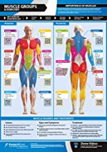 """Muscle Groups & Exercises 