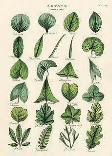 Cavallini & Co. Botany Leaves Decorative Paper Sheet