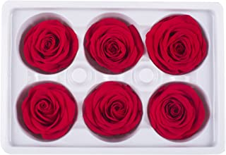 Ogis Florist Preserved Roses 6Packs Large Head, DIY Arrangements Pieces Decoration, No Water Needed (Red)