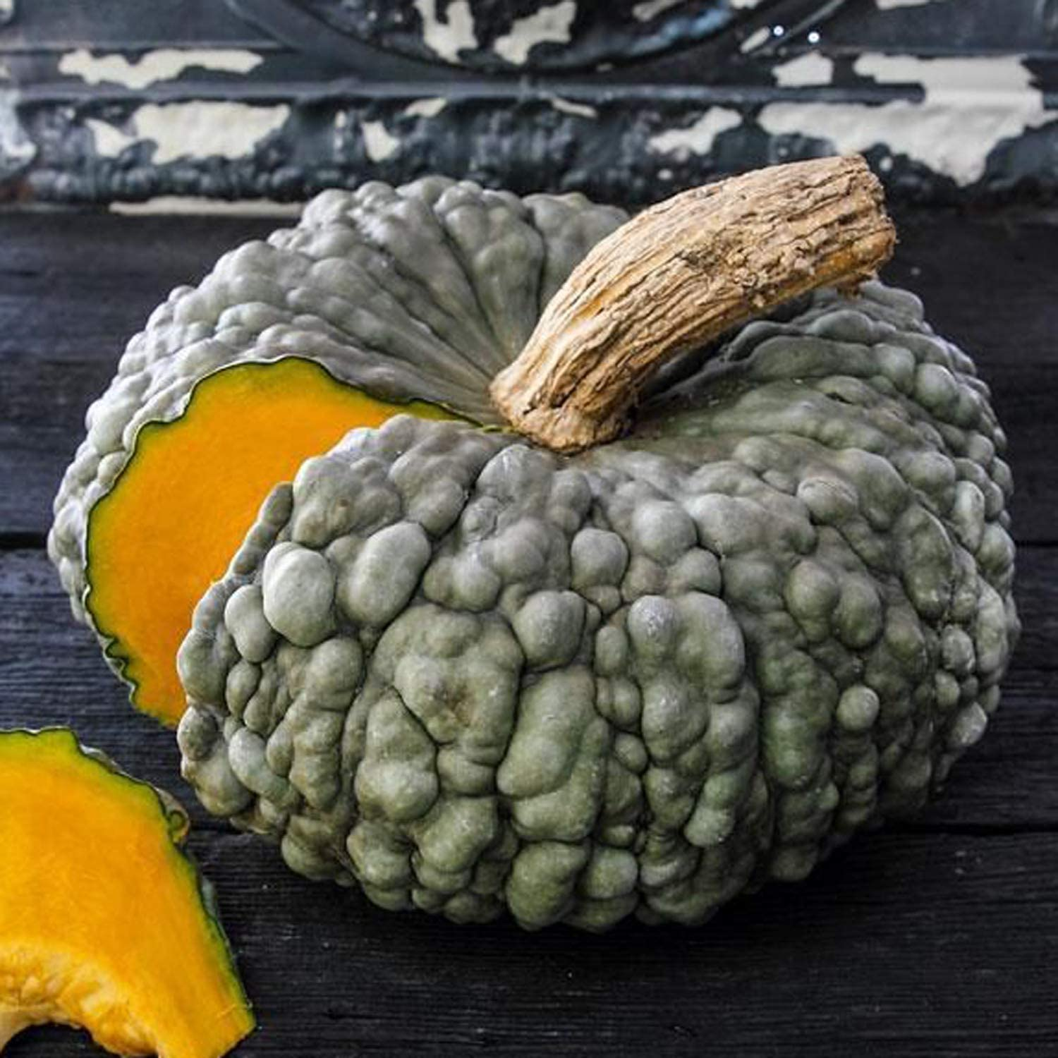 UtopiaSeeds Marina All items in Max 43% OFF the store di Chioggia Pumpkin Blue Warty Squash - Seeds