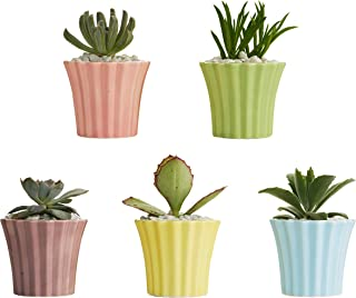 BABSY Succulent Planter Pots with Drainage Hole for Cactus, Herbs, Flowers (Cupcake Pastels)