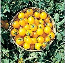 David's Garden Seeds Tomato Cherry Gold Nugget SL7338 (Gold) 50 Non-GMO, Organic Seeds