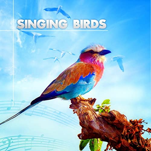 Sound Of Peaceful Birds By Nature Sounds On Amazon Music