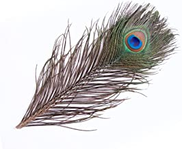 鳥の羽-ピーコック・アイ Sサイズ 4本 [019-Eye-S-N] ナチュラル【メール便発送】 孔雀の羽根