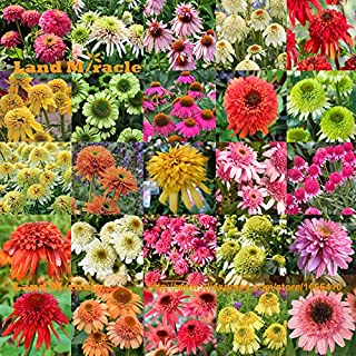 25 Types Mix Echinacea Outdoor Flower Plant Germinate Seeds, 100 Seeds, Rare Long-bloom Coneflower Bonsai for Home Garden Indoor