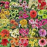 25 tipos Mix Semillas de la flor del Echinacea al aire libre Planta de germinar, 100 semillas, Rare largo flor Equinácea Bonsai para jardín interior
