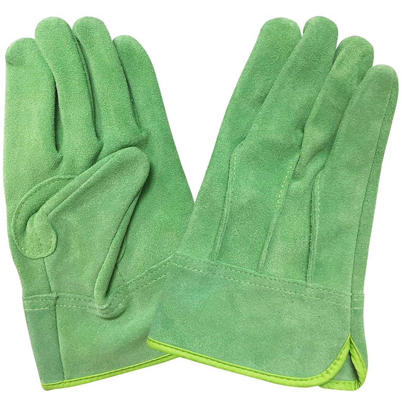 【エースグローブ】 現場系女子 牛床革外縫い内綿 グリーン Mサイズ AG2552
