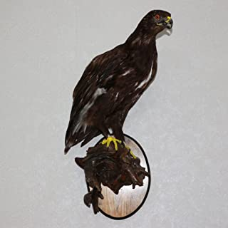 GOLDEN EAGLE TAXIDERMY BIRD MOUNT - TAXIDERMIED, MOUNTED, STUFFED BIRDS FOR SALE - REAL, DECOR, LIFESIZE - ST4144