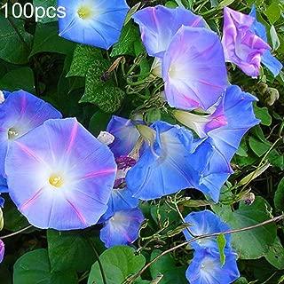 Mggsndi 100Pcs Petunia Seeds Morning Glory Ornamental Climbing Flower Plant Garden Decor - Heirloom Non GMO - Seeds for Planting an Indoor and Outdoor Garden Petunia Seeds