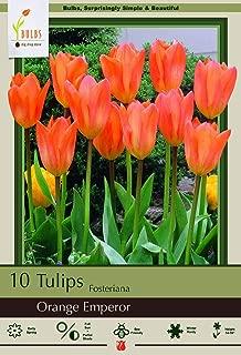 Best tulip orange emperor Reviews