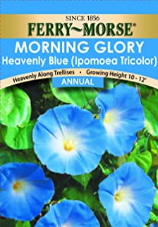 Ferry-Morse Morning Glory Heavenly Blue Seeds (Annual)