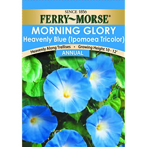 Morning Glory Seeds: Amazon com