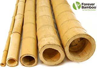 Forever Bamboo Premium Natural Bamboo Poles 8ft, Set of 12