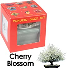 Eve's Garden Cherry Blossom Penjing Seed Kit, Chinese Art of Bonsai, Complete Kit to Grow Flowering Cherry Blossom Penjing from Seed