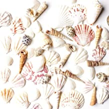 "Sea Shells Mixed Beach Seashells - Various Sizes up to 2"" Shells -Bag of Approx. 50 Seashells"