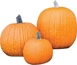Burpee The Wrinkles Family Pumpkin Collection Pumpkin Seeds 3 packets of seed.