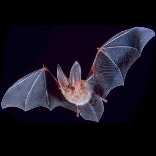 Fledermaus Arten Trivia quiz