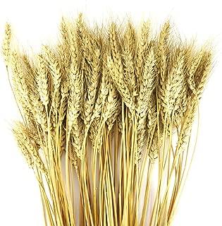 Best artificial wheat grass decor Reviews