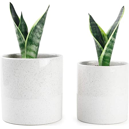 5 inch Diameter Brief Succulent Pots P013 2 Pack Modern Cement Cactus Flower Aloe Snake Plant Planter Container with Drainage Hole White