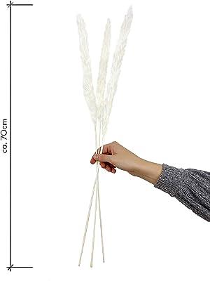 Césped de Pampas (Cortaderia selloana) de secado natural, duradero, decoración de flores (bodas, eventos, ocasiones) decoración de interiores, decoración de interiores (casa, salón) Boho Chic – Longitud aprox. 70 cm color blanco