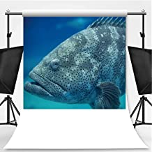 Goliath Grouper in Underwater Theme Backdrop Photography Polyester Backdrop,104796,5x7ft