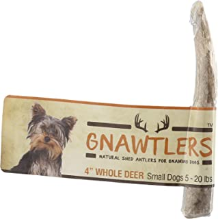 Gnawtlers - Premium Deer Antlers For Dogs, Naturally Shed Deer Antlers, All Natural Deer Antler Dog Chew, Specially Selected From The Heartland Regions