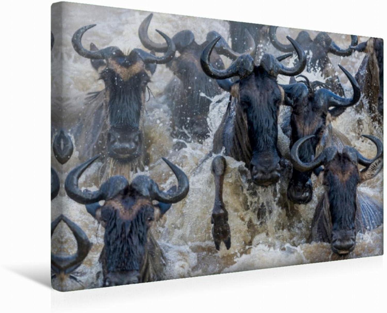 Calvendo Premium Textil-Leinwand 45 cm x 30 cm quer Emotional Moments  African Wildlife   Wandbild, Bild auf Keilrahmen, Fertigbild auf echter Leinwand, Leinwanddruck Tiere Tiere