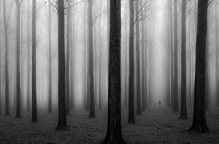 "JP London SPMURLT1X372443 JPL and Jochen Bongaerts present In a Fog Misty Forest Fog Black White 36"" x 24"" Prepasted Fully Removable Wall Poster Mural"