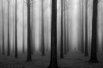 "JP London SPMURLT1X372443 JPL and Jochen Bongaerts present In a Fog Misty Forest Fog Black White 36"" x 24"" Prepasted Fully Removable Wall Poster Mural"