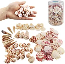 Best shells for crafts Reviews