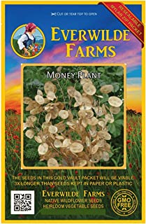 Everwilde Farms - 50 Money Plant Wildflower Seeds - Gold Vault Jumbo Seed Packet