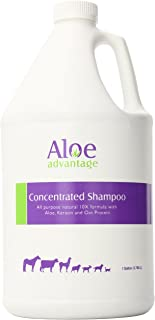 Aloe Concentrated Shampoo 1 Gallon