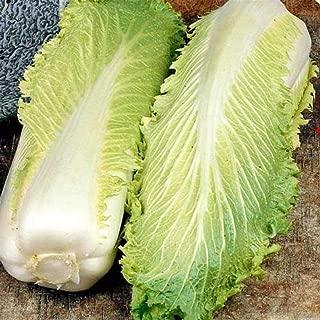 Best michihili chinese cabbage Reviews