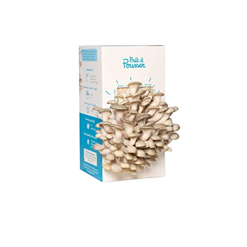 Grey Oyster Mushroom Kit - Grow Your Own Organic Mushrooms right out of the box in just 10 days!