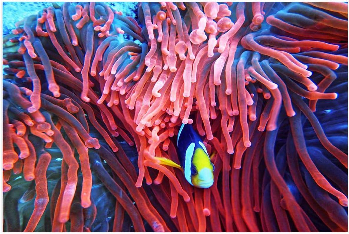 PVC Aquarium Background Poster for Max 52% OFF Decorations Ocean Tank Popular products M Fish