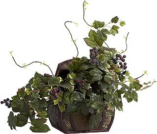 Best table grape plants for sale Reviews