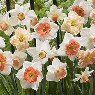 Van Zyverden Daffodils Pink Mixture Set of 50 Bulbs