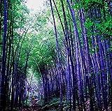 50 PC \ pote bolsa híbrido, semillas de bambú raros, el aire limpio, decoración de la casa de color rosa, rojo, amarillo, colores verde, plantas en maceta bonsai multicolora
