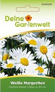 Weiße Margerite Mayfield Riesen   Margeritensamen   Saatgut für Sommerwiesen
